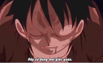 One Piece Tập 865 - Luffy bắt đầu dùng haki, quan sát được tương lai gần