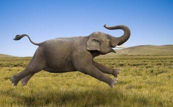 """Câu đố """"Cái gì to bằng con voi nhưng chẳng nặng gram nào""""? 12"""