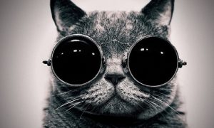 mèo là những gián điệp của người ngoài hành tinh