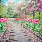 +1000 Hình Nền Hoa TuLip - Hoa Tulip Đẹp Nhất