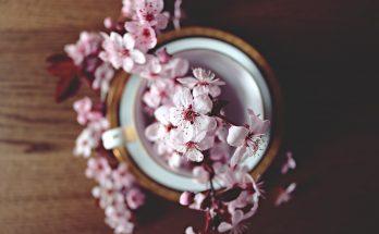 Hình nền hoa anh đào đẹp nhất hiện nay
